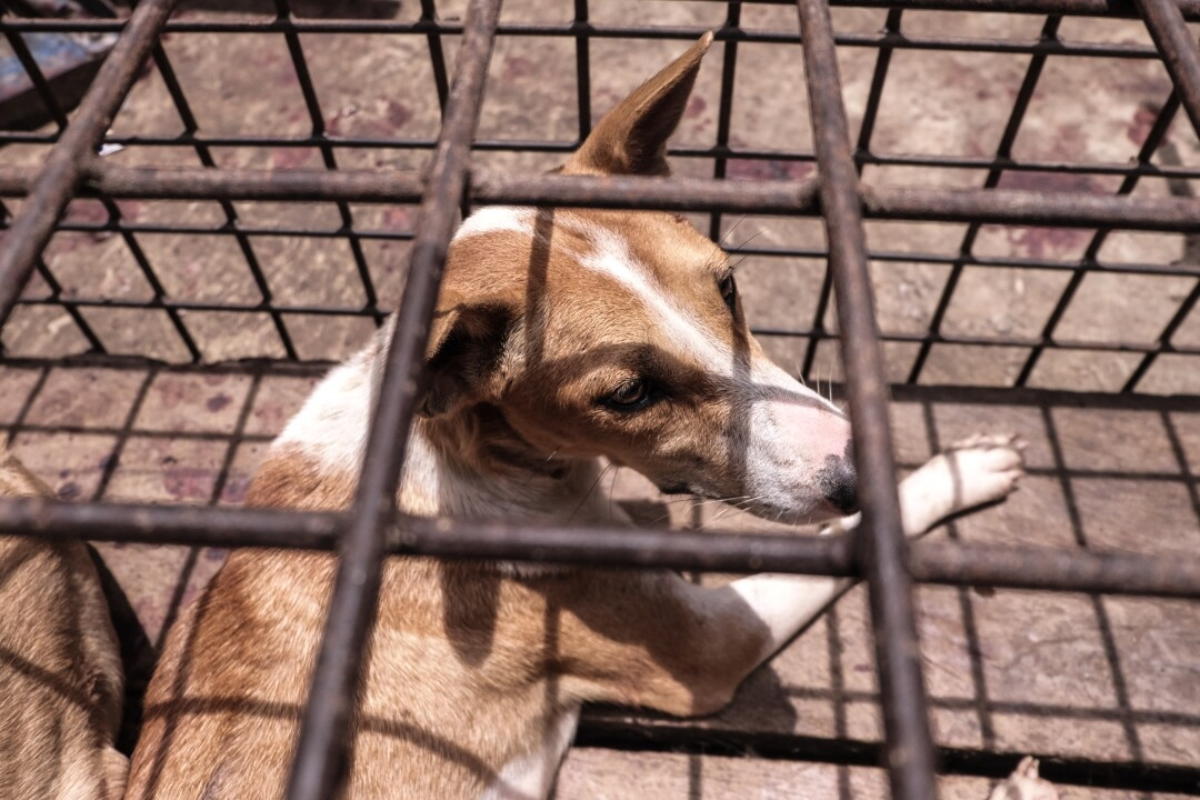 A dog in a cage at the market in Tomohon, Indonesia