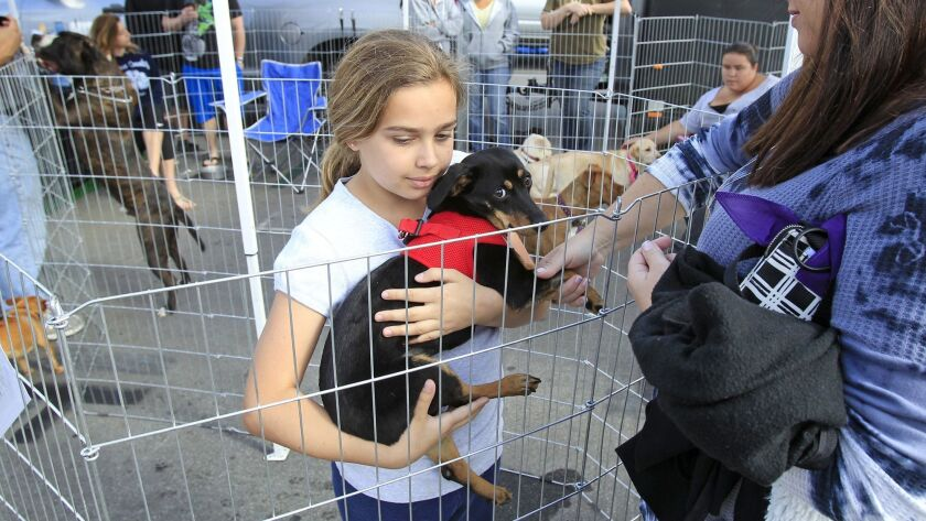 Visitors meet Ana the dachshund at a pet fair and adoption event at the Orange County fairgrounds. Priceless Pets will open a new adoption center, called The Orphanage, Saturday at 1536 Newport Blvd. in Costa Mesa.
