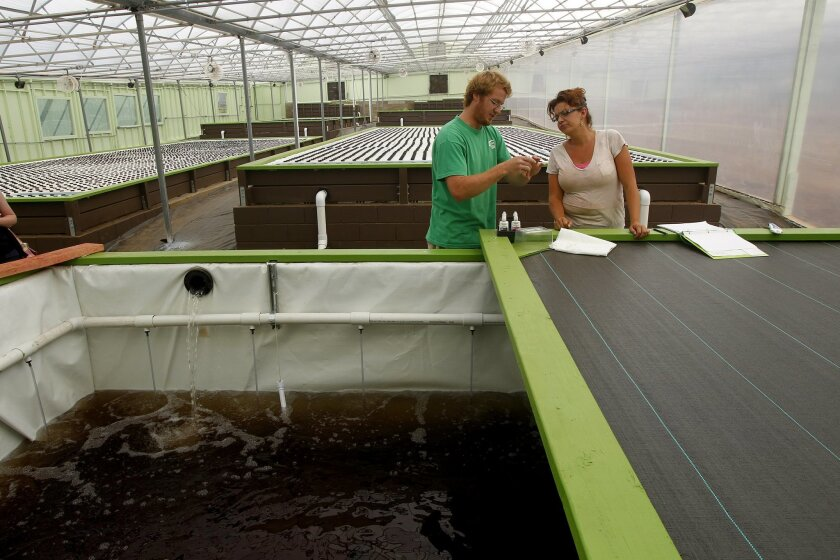 North County nonprofit Solutions for Change has opened an aquaponic farm, which they say is the largest in San Diego County. The farm basically consists of fish swimming around in pools with rafts of produce growing above them.