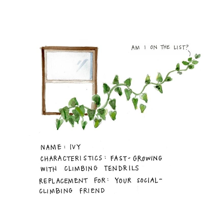 Plant illustration