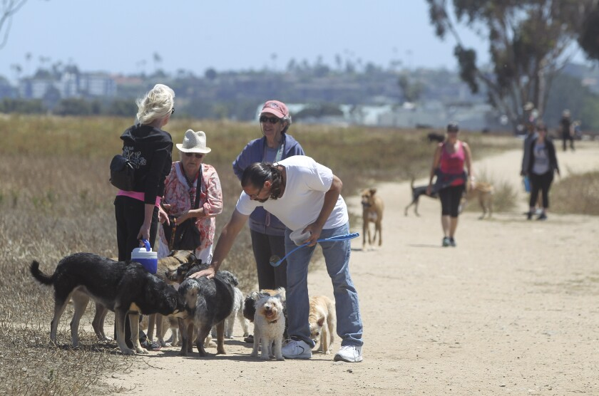 Dog owners let dogs socialize in the off-lease area at Fiesta Island in 2019.