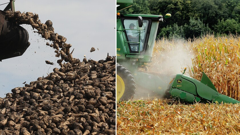 Sugar beets, a source of table sugar, and corn, source of high-fructose corn syrup.