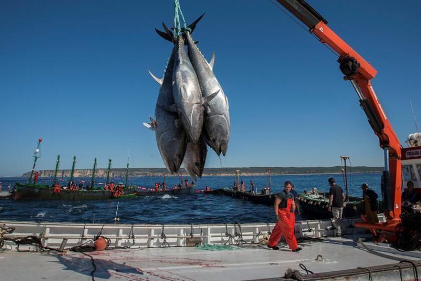 Las pesquerías serán un 20 % menos productivas en 2.300 por calentamiento