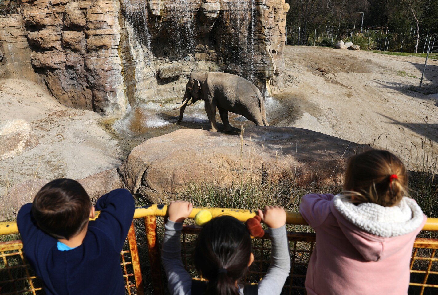 Billy the elephant in his enclosure at the Los Angeles Zoo. L.A. City Councilmen Paul Koretz and Mitch O'Farrell want the 32-year-old elephant moved to a sanctuary.