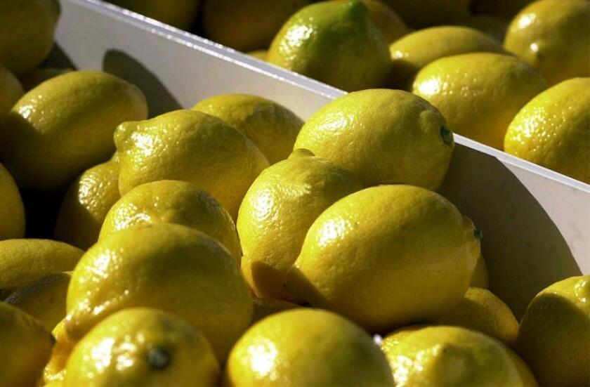 El Departamento de Agricultura (USDA) anunció la suspensión durante 60 días de la norma de diciembre pasado que reabría la importación de limones del noroeste argentino al país norteamericano. EFE/Archivo