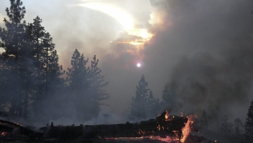 Conservationists aim to restore land scorched by massive Rim fire
