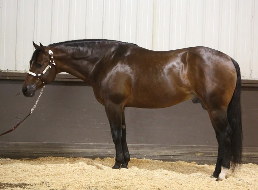 Champion quarter horse Good I Will Be