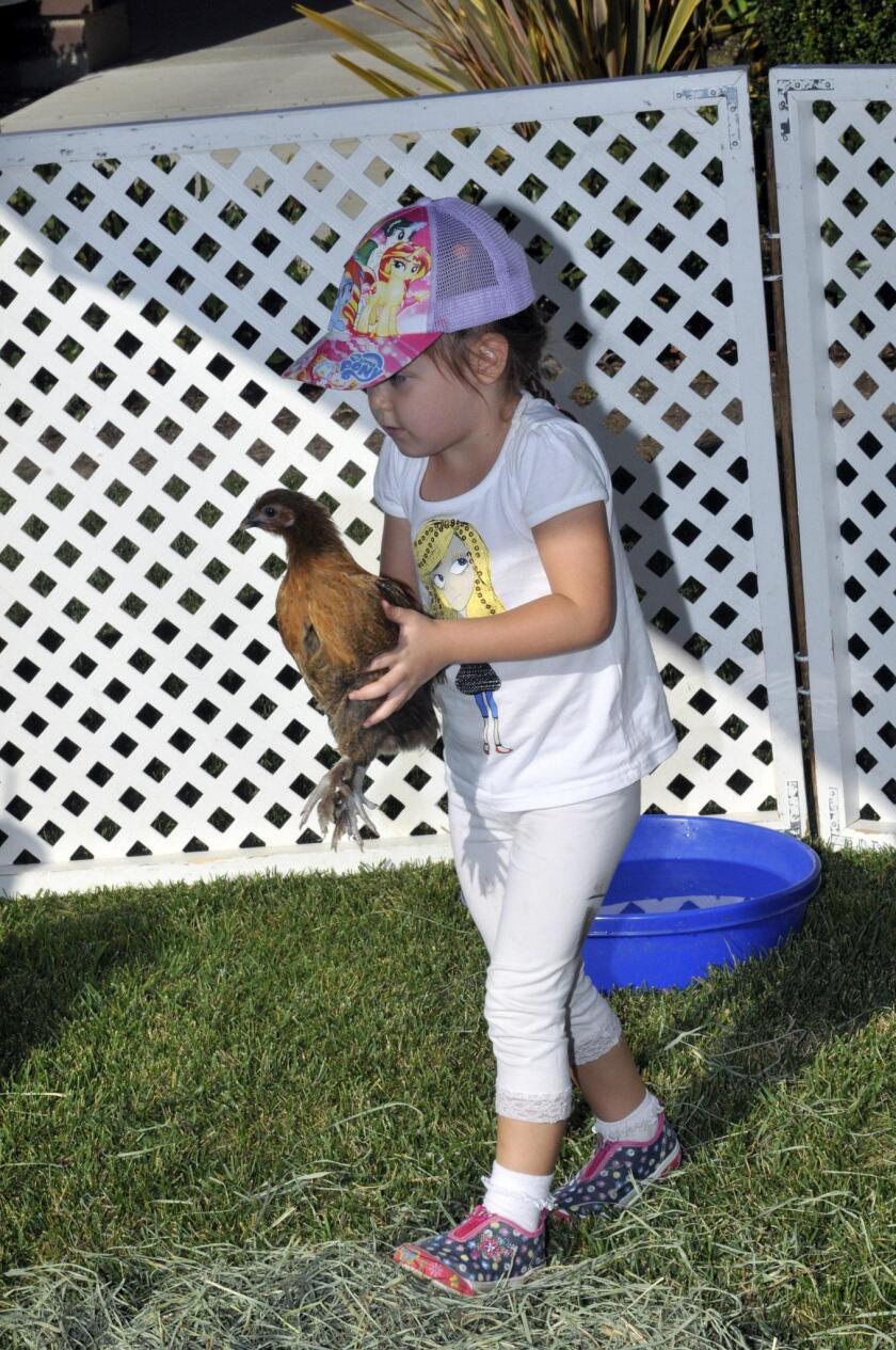 Nicole enjoys the petting corral