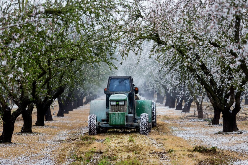 Almonds became the whipping boy of California's drought in a year when consumers discovered the water footprint of their food.