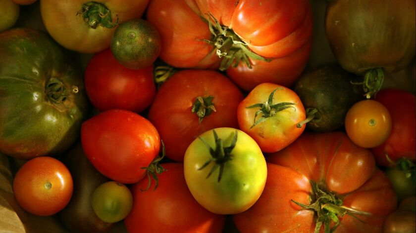 Early Girl, Cherokee Purple or Sweet 100? Readers share their tomato