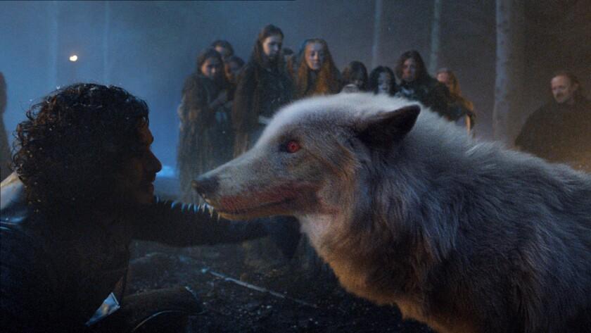 GAME OF THRONES episode 35 (season 4, episode 5): Ghost, the direwolf belonging to Jon Snow (Kit Har