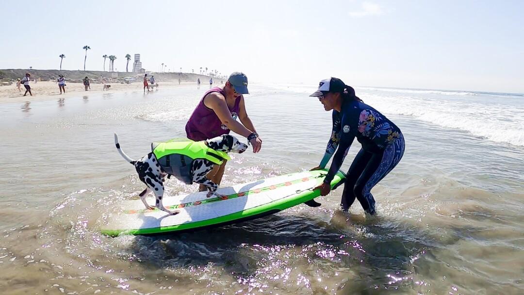 A dog on a surfboard at the beach