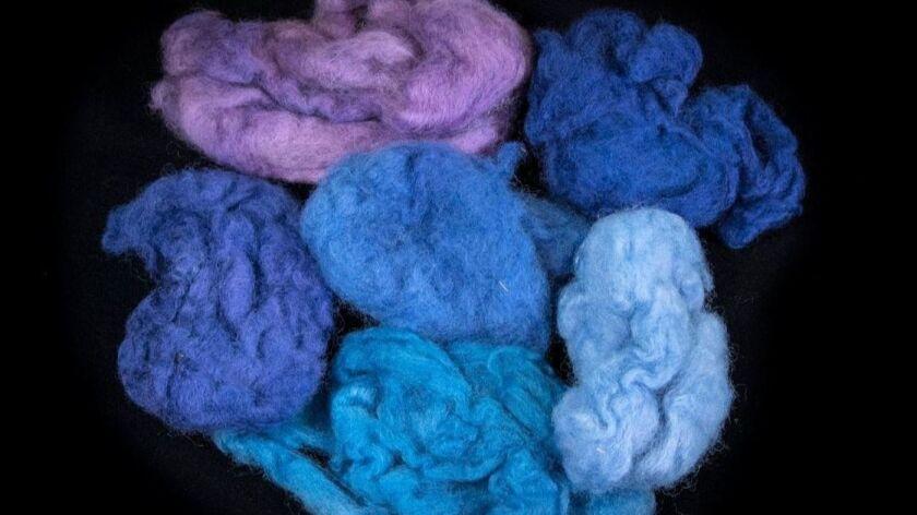 Lana teñida en varios colores extraídos del caracol Murex trunculus. (Moshe Cain).