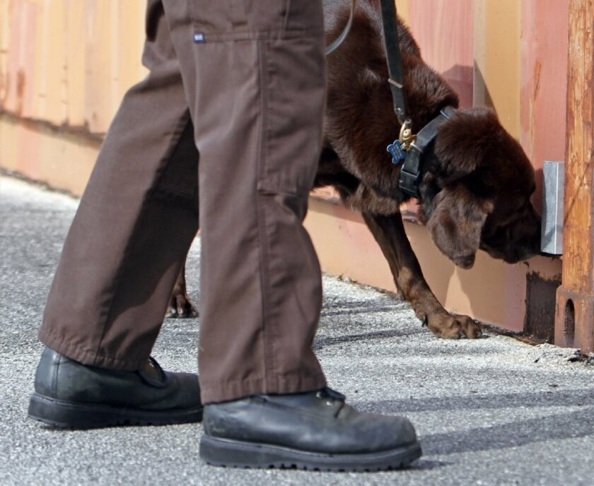 Franky, the retired Miami-Dade drug sniffing dog who helped Emma's experiment, is seen here giving a demonstration of his skills in 2011.