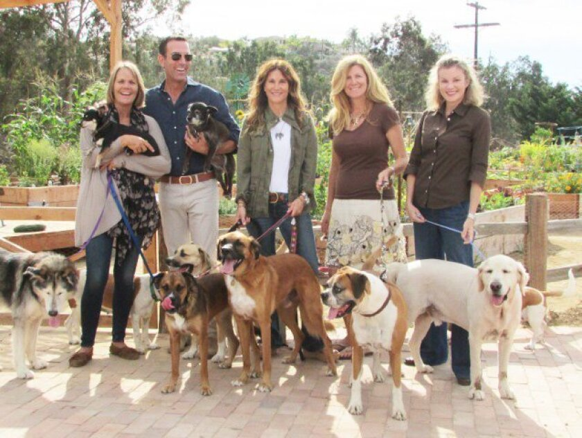 Thrive Animal Rescue is made up of CeCe Bloum, Marc Grock, Susie Saladino, Kate Anderson and Georgia Spogli.