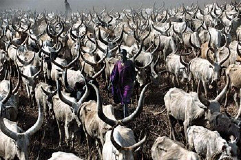 A Dinka herder. Angela Fisher and Carol Beckwith