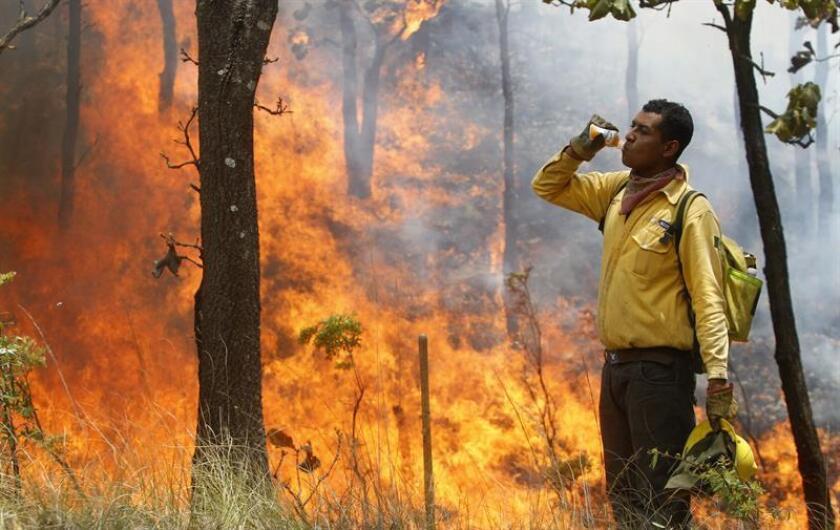 Alrededor de 2.000 hectáreas del bosque La Primavera han sido consumidas por un incendio que detonó la declaración de una alerta atmosférica en Guadalajara, capital del estado mexicano de Jalisco, dijeron hoy las autoridades. EFE/ARCHIVO