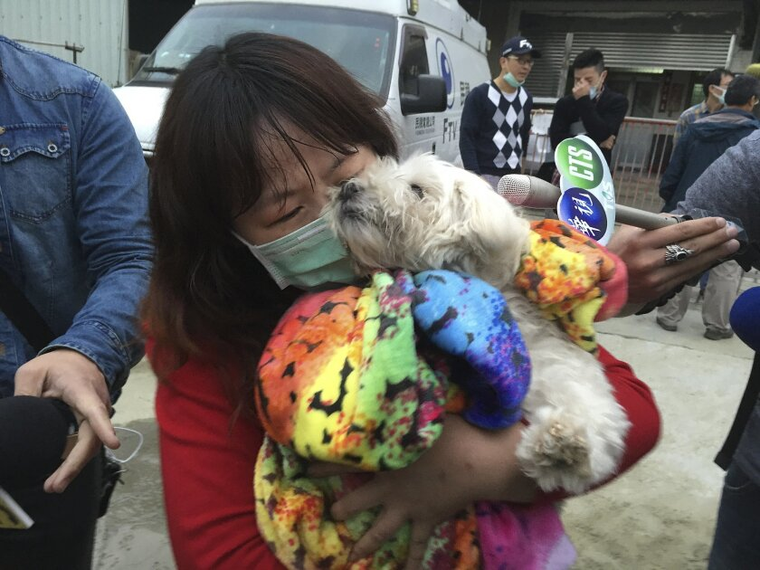 A rescued pet Maltese dog named Le Le, 7 years old, is held by a relative of the owner after it was rescued from a collapsed building complex in Tainan, Taiwan, Wednesday, Feb. 10, 2016. The Tainan District Prosecutors Office said in a statement Wednesday that they have approved the detention of th