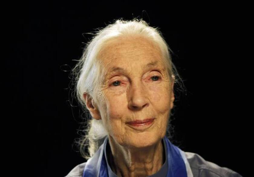 Jane Goodall to promote conservation as Rose Parade grand marshal