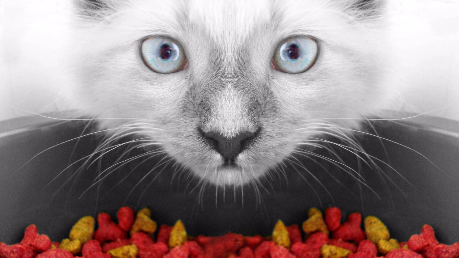 What do I need to know to make my own cat food? - Los