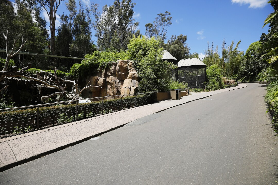 Center Street, home to some of the bears who live at the San Diego Zoo, is empty on May 19, 2020.