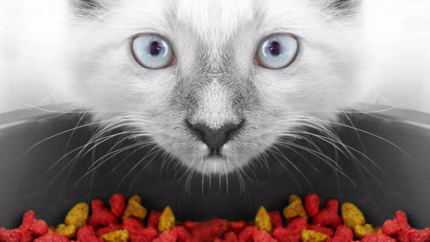 What do I need to know to make my own cat food? - Los Angeles Times