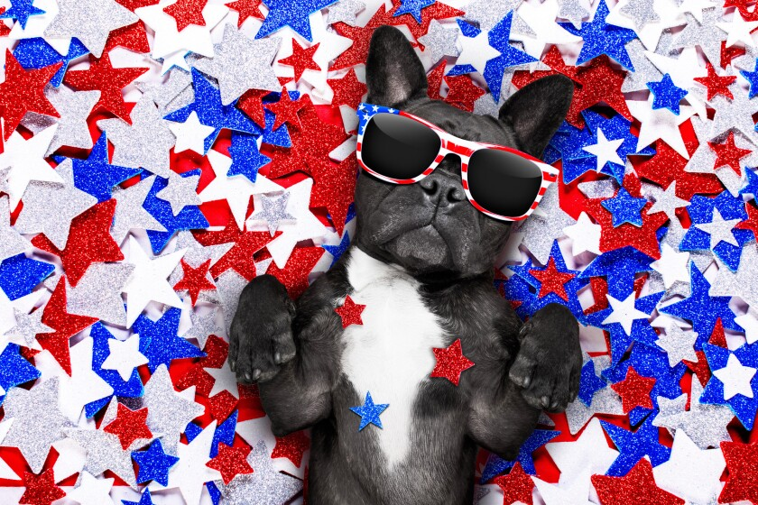 A dog wearing patriotic sunglasses laying among red, white and blue stars.
