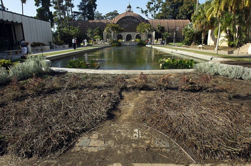Damaged landscaping around the Balboa Park lily pond was removed by city workers, leaving bare earth.