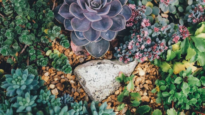 Drought-friendly plantings can beautify your landscape and lower your water bill. Credit: Annie Spra