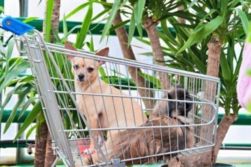 dog_shopping_t730_1