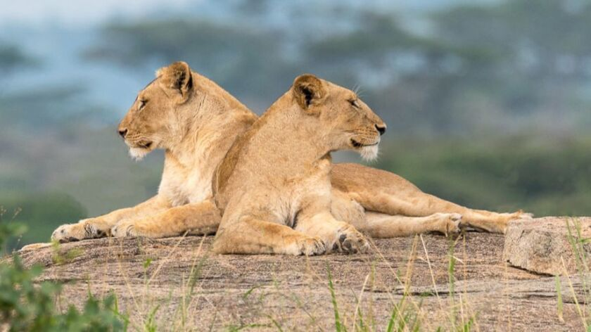 Photo tour participant Kate Montague captured these images while in Africa. Credit: Kate