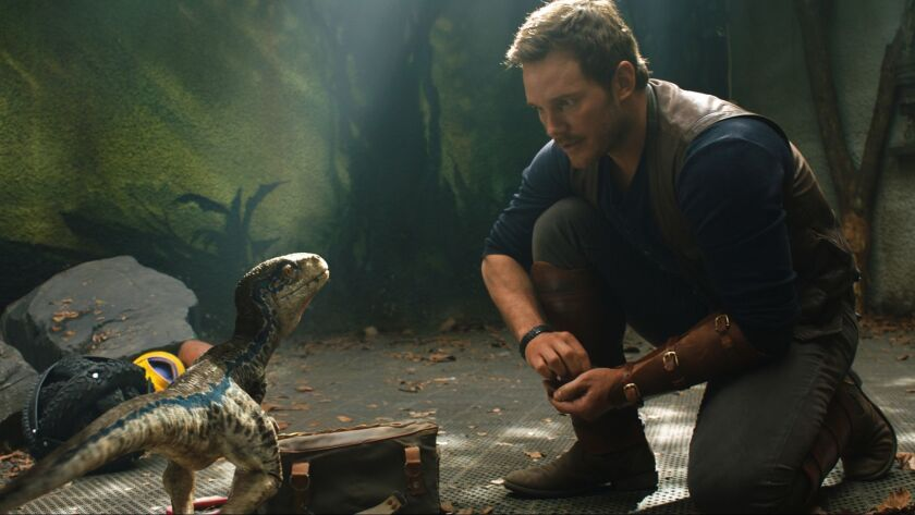 Owen (CHRIS PRATT) with a baby Velociraptor in Jurassic World: Fallen Kingdom. When the island's do