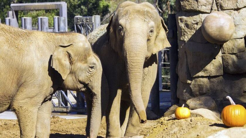 Asian elephant Sujatha, right, is shown with her pal, Little Mac, in this undated photo from the Santa Barbara Zoo. Sujatha was euthanized Tuesday, surrounded by her caretakers.