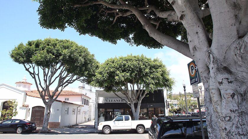 Ficus trees form a near canopy on Ocean Ave near PCH in downtown Laguna Beach.