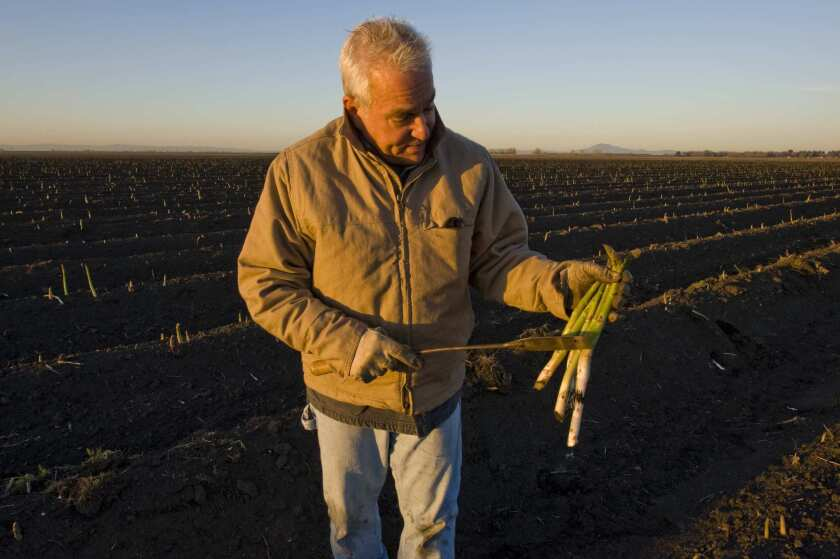 Roscoe Zuckerman with asparagus at his farm in Lodi, in the Delta.