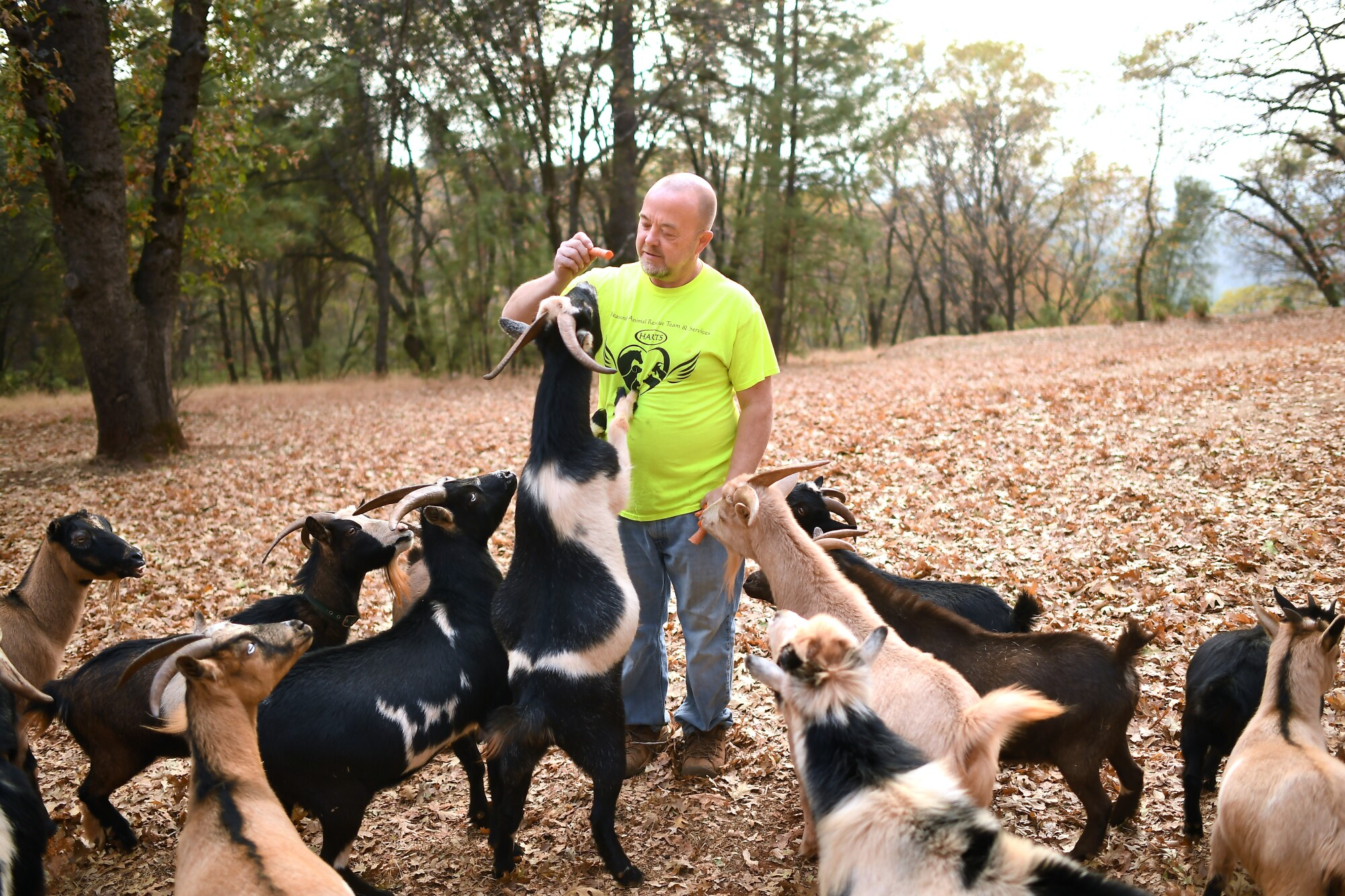 Jim Clark and his goats