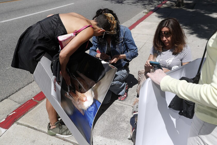 Women with Progress for Science, on a very windy afternoon, attempt to put together protest signs at California Assemblymember Laura Friedman's district office in Burbank on Wednesday, April 10, 2019. Assemblymember Friedman introduced AB-700, a bill that would block access to information about how animals are being used in science.