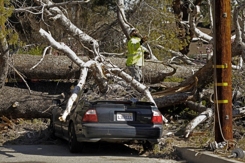 High winds caused a large tree to fall in Sierra Madre