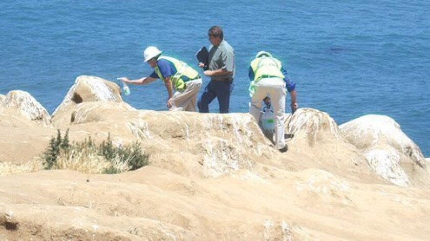 Oder Eaters: Using an eco-friendly foam, workers try to rid La Jolla Cove of its odor — and a thick crust of bird poop. The City of San Diego spent $100,000 on a two-part cleaning process in 2013,though the stench has returned, courtesy of sea lions. La Jolla Light photo