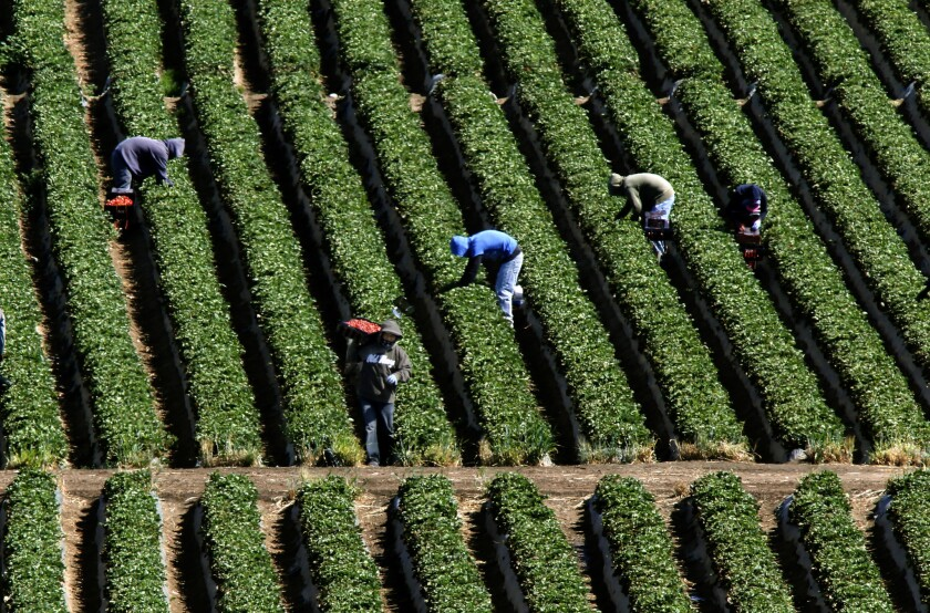 Produce industry releases plan for ending abusive Mexican