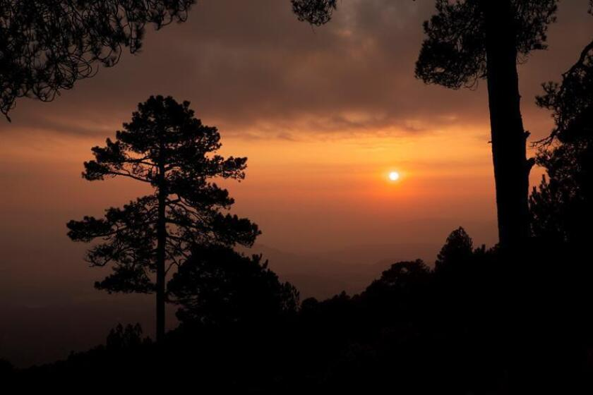 Fotografía del 24 de febrero de 2018, de la zona boscosa cercanas al volcán extinto Nevado de Toluca, en el central Estado de México (México). México será la sede de inicio de la Evaluación de los Recursos Forestales Mundiales (FRA, por su sigla en inglés) 2020 con un taller internacional que acogerá a 145 naciones, informó hoy la Organización de las Naciones Unidas para la Alimentación y la Agricultura (FAO).EFE