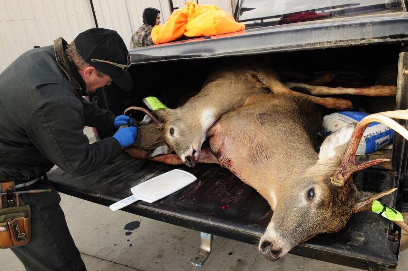 Wasting Disease-Zombie Deer