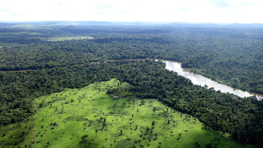 Deforestation in Brazil's Amazon rainforests reduces the land to grass.