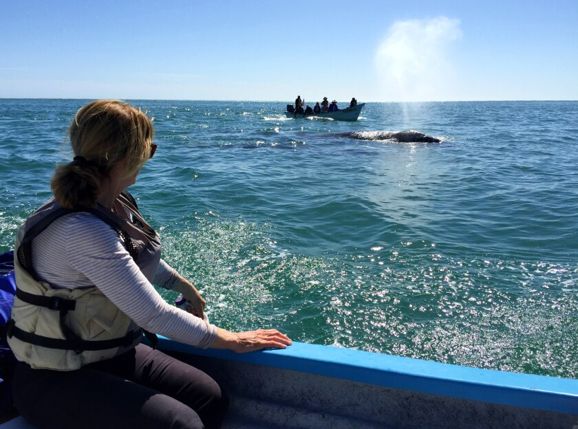 """Kathy Kelleher watches a whale from a safe distance. Most of the """"liquid"""" is formed when the warm air from inside the whale hits the cooler outside air."""