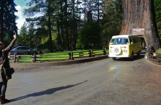 A Minute Away: Driving through the redwood, Leggett, Ca.