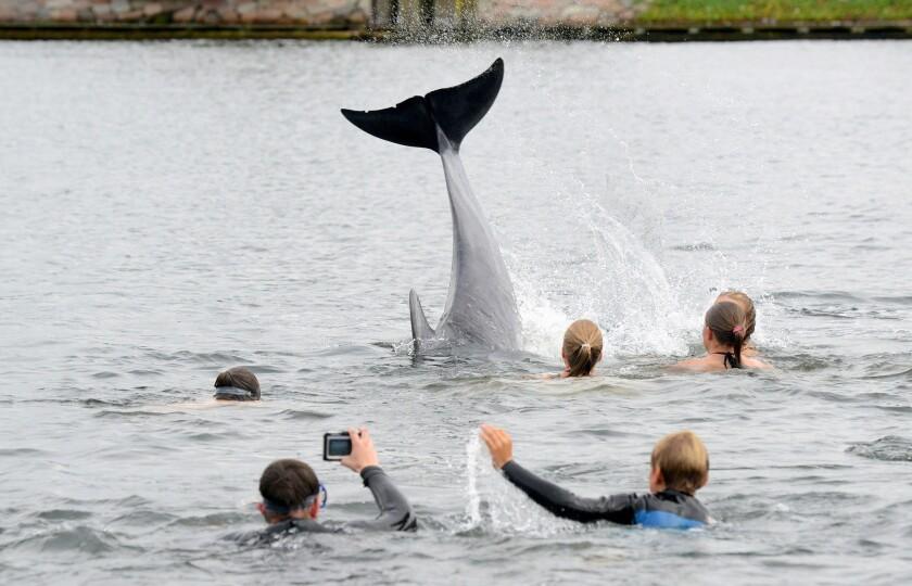 En esta imagen del 11 de septiembre de 2016, gente tomando fotos de un delfín cerca de Kiel, Alemania. ( Thomas Eisenkraetzer/dpa via AP)