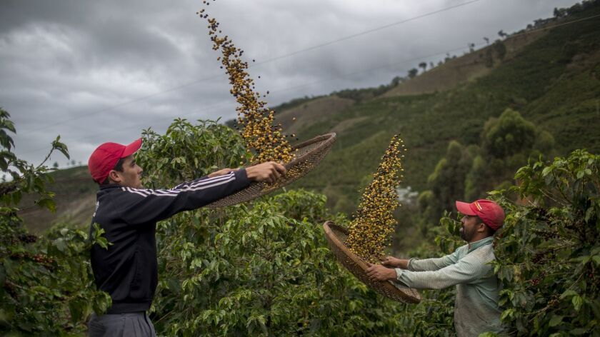 Coffee beans are winnowed on a family farm in Forquilha do Rio, Brazil.