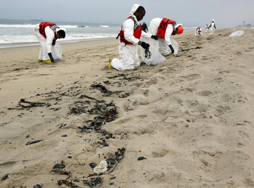 A cleanup crew collects balls of tar that washed ashore in Manhattan Beach, Calif. on Thursday, May 28, 2015. Popular beaches along nearly 7 miles of Los Angeles-area coastline are off-limits to surfing and swimming after balls of tar washed ashore. The beaches along south Santa Monica Bay appeared virtually free of oil Thursday morning after an overnight cleanup, but officials aren't sure if more tar will show up. (AP Photo/Nick Ut)