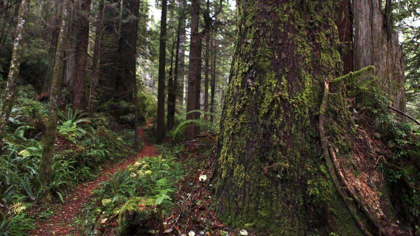 la–me–1206–redwoods