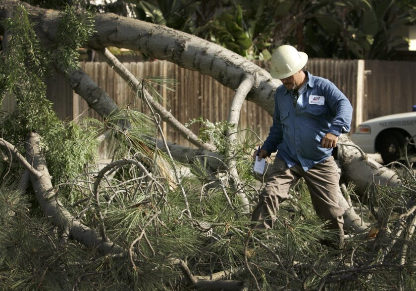 Dominic Garegnani, of San Diego Gas & Electric, climbs over some of the tree branches that broke off of a tree and ended up blocking Soto Street in Ocean Beach at about 7:15 a.m. Monday.